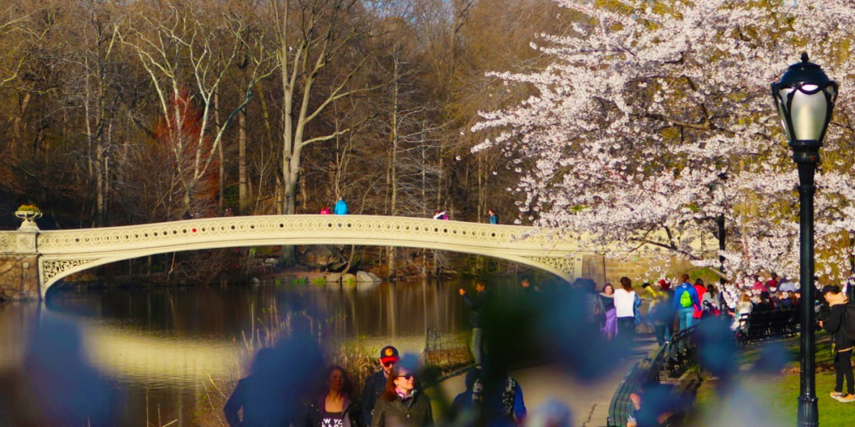 Spring in New York: what to do in April, May, June  Weather