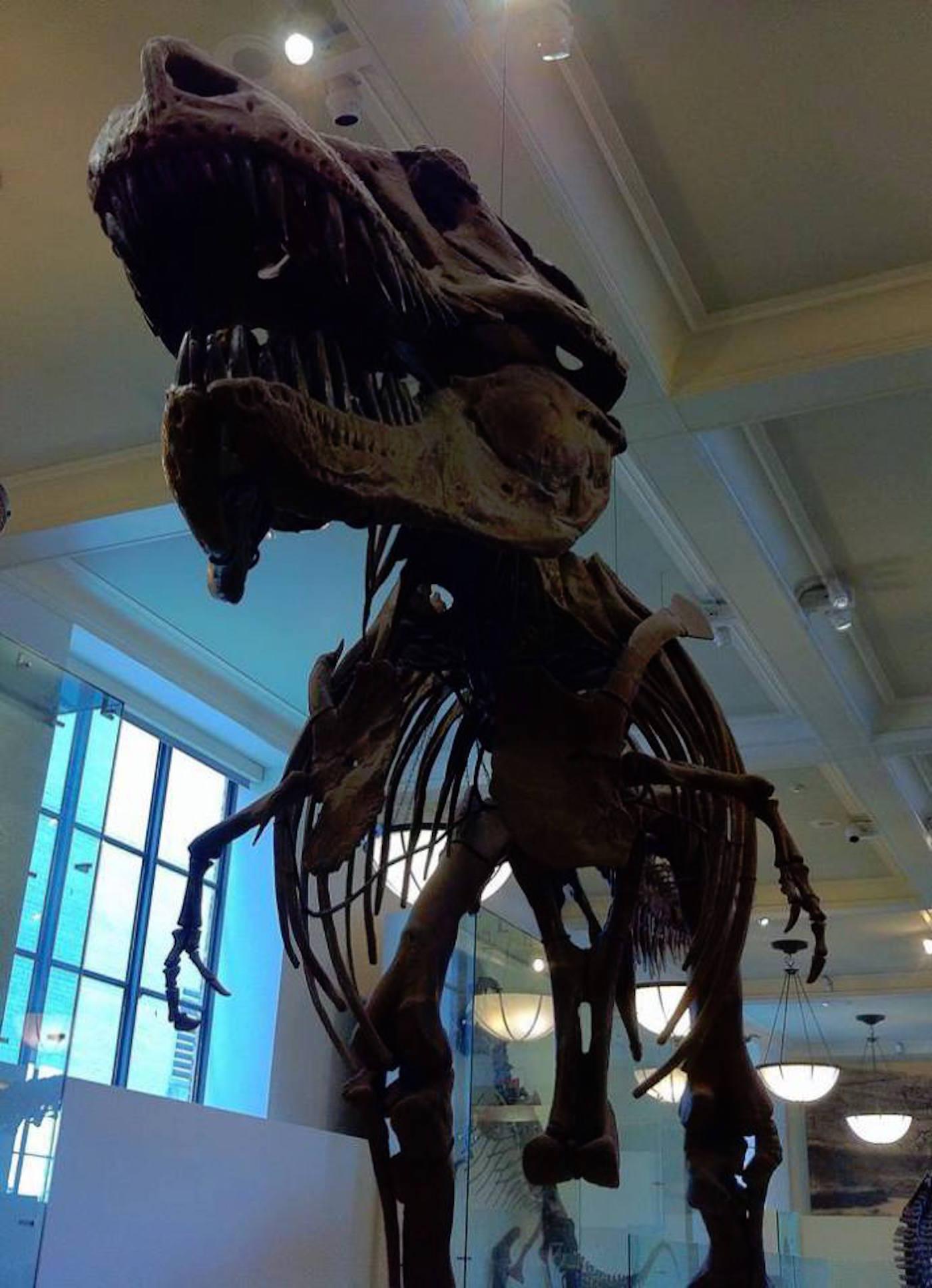 Museo Storia Naturale New York.Visita Il Museo Americano Di Storia Naturale E Dello Spazio New York